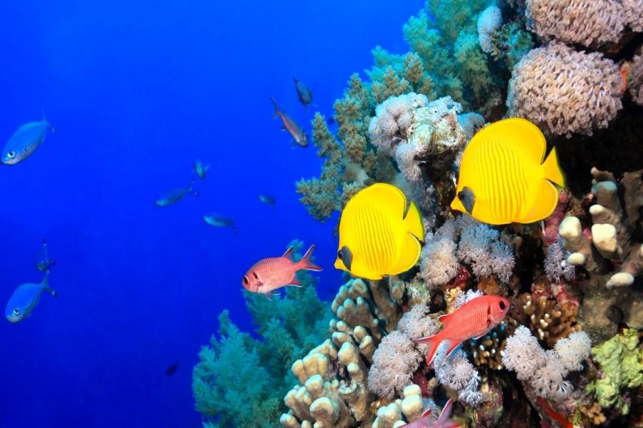 Peces de colores tropicales