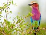 Bello y colorido pájaro posado en una rama