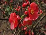 Flores rojas en una ramificación