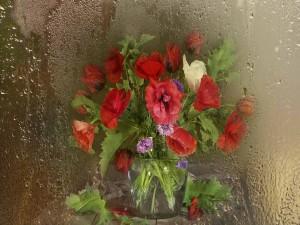 Vistosas amapolas detrás de un vidrio con gotas de agua