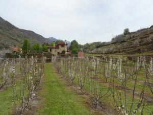 Floración de los cerezos en el Valle del Jerte (Cáceres, España)