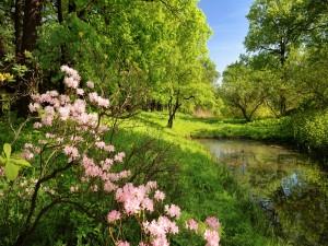 Bellas flores a orillas del estanque