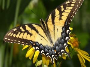 Bella mariposa posada en una flor