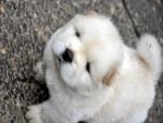 Tierno y bello perrito blanco