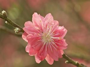Rama con una bella flor rosa