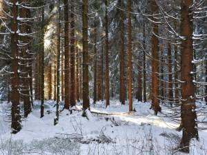 Invierno en el bosque