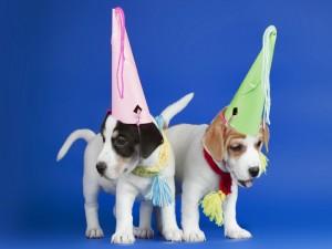 Perritos con sombreros de cartulina