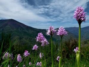 Flores lilas en las montañas