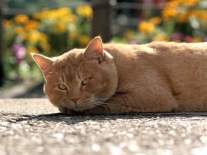 Un gran gato tumbado en el asfalto