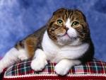 Gato sobre un cojín