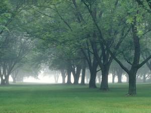 Niebla en la arboleda