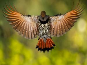 Hermoso pájaro con sus alas extendidas