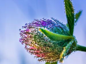 Gotas de rocío sobre una flor