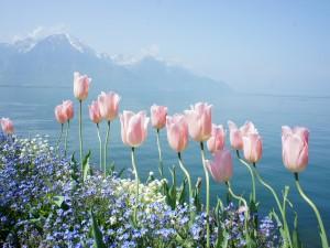 Bellas flores junto al lago