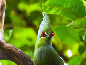 Loro verde posado en una rama