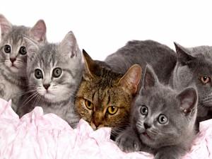 Tiernos gatitos sobre una tela rosa
