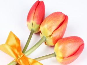 Tres tulipanes con un lazo amarillo