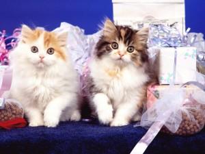 Dos gatitos entre cajas de regalos
