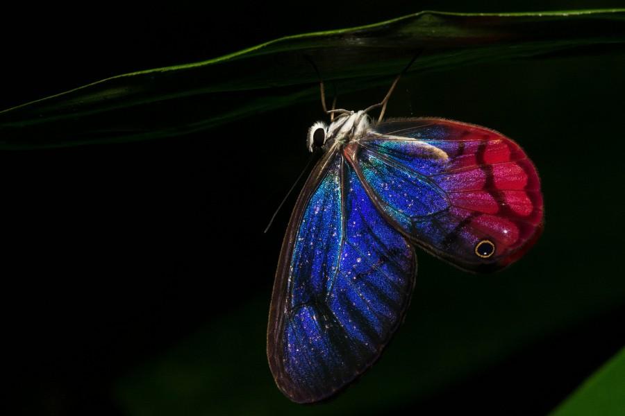 Mariposa en la noche