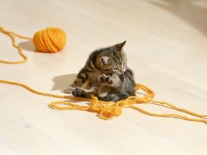 Gatito junto a un ovillo de lana