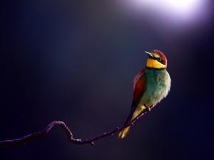 Bonito pájaro posado en el extremo de la rama