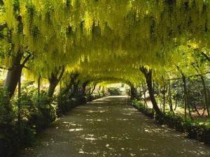 Hermosos árboles formando un túnel