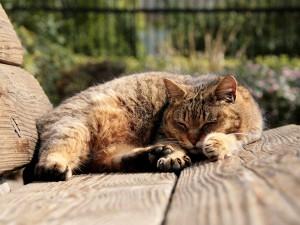 Gato durmiendo sobre un banco de madera