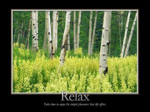 Relax en el bosque