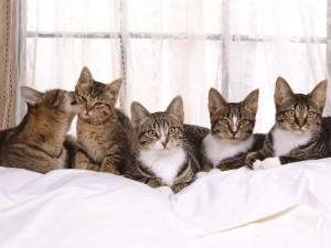 Gatos tumbados junto a una ventana