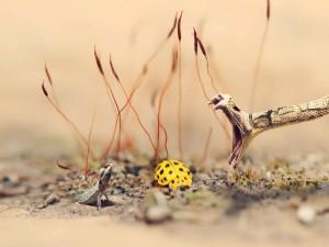 Mariquita amarilla entre la serpiente y el lagarto