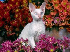 Un gato entre margaritas de colores