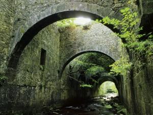 Vegetación entre los muros de piedra