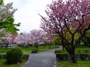 Árboles florecidos en los jardines del Castillo Nijo (Kyoto, Japón)