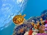 Tortuga bajo el agua junto al arrecife