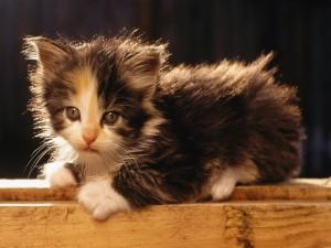 Tierno gatito