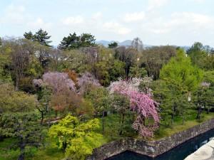 Arboleda en el Castillo Nijo (Kyoto, Japón)