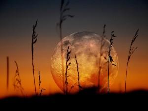 Hermosa vista de la Luna llena