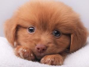 Lindo perrito marrón