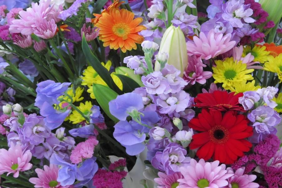 Coloridas flores en primavera
