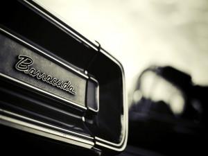 Barracuda en un coche