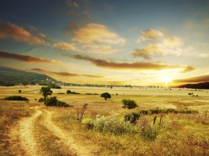 Sol brillando sobre el campo