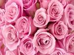 Hermosas rosas de color rosa