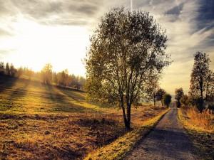 Sol iluminando el camino campestre