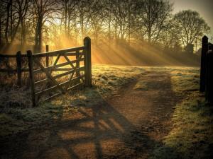 Rayos de sol iluminando el camino