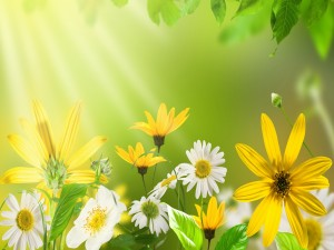 Rayos de sol sobre las flores
