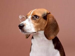 Lindo perrito con gafas