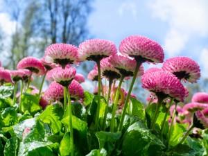 Flores recién regadas en el jardín