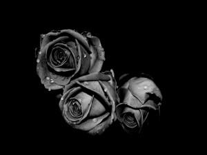 Tres rosas en blanco y negro