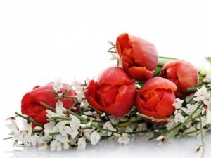 Un ramo con tulipanes y flores blancas
