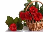 Rosa de color rojo en una cesta